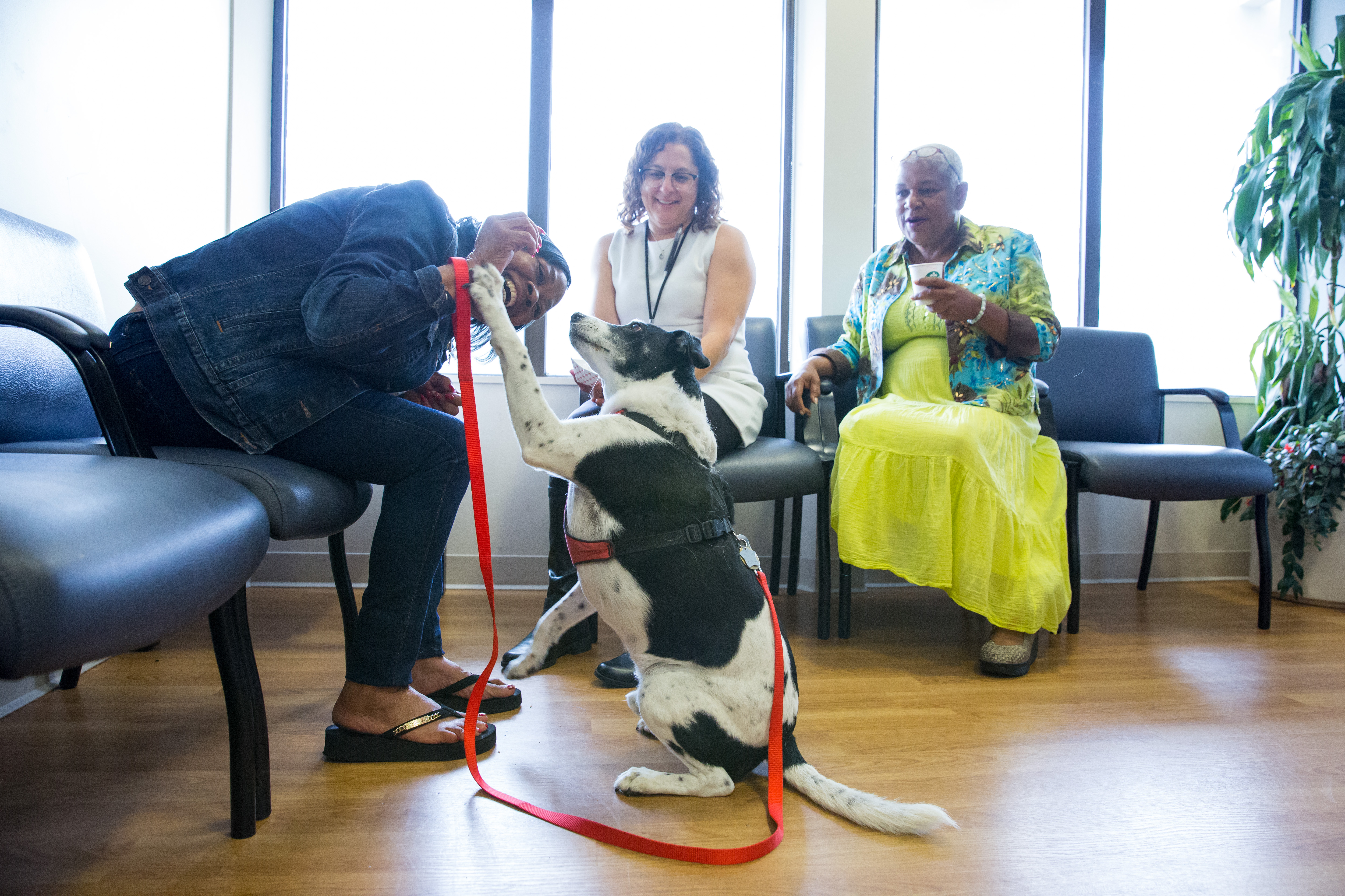 IMPORTED: www_commonwealthfund_org____media_images_newsletters_transforming_care_2016_june_ucsf_20160622_therapy_dog_selects_004_w_100_25.jpg