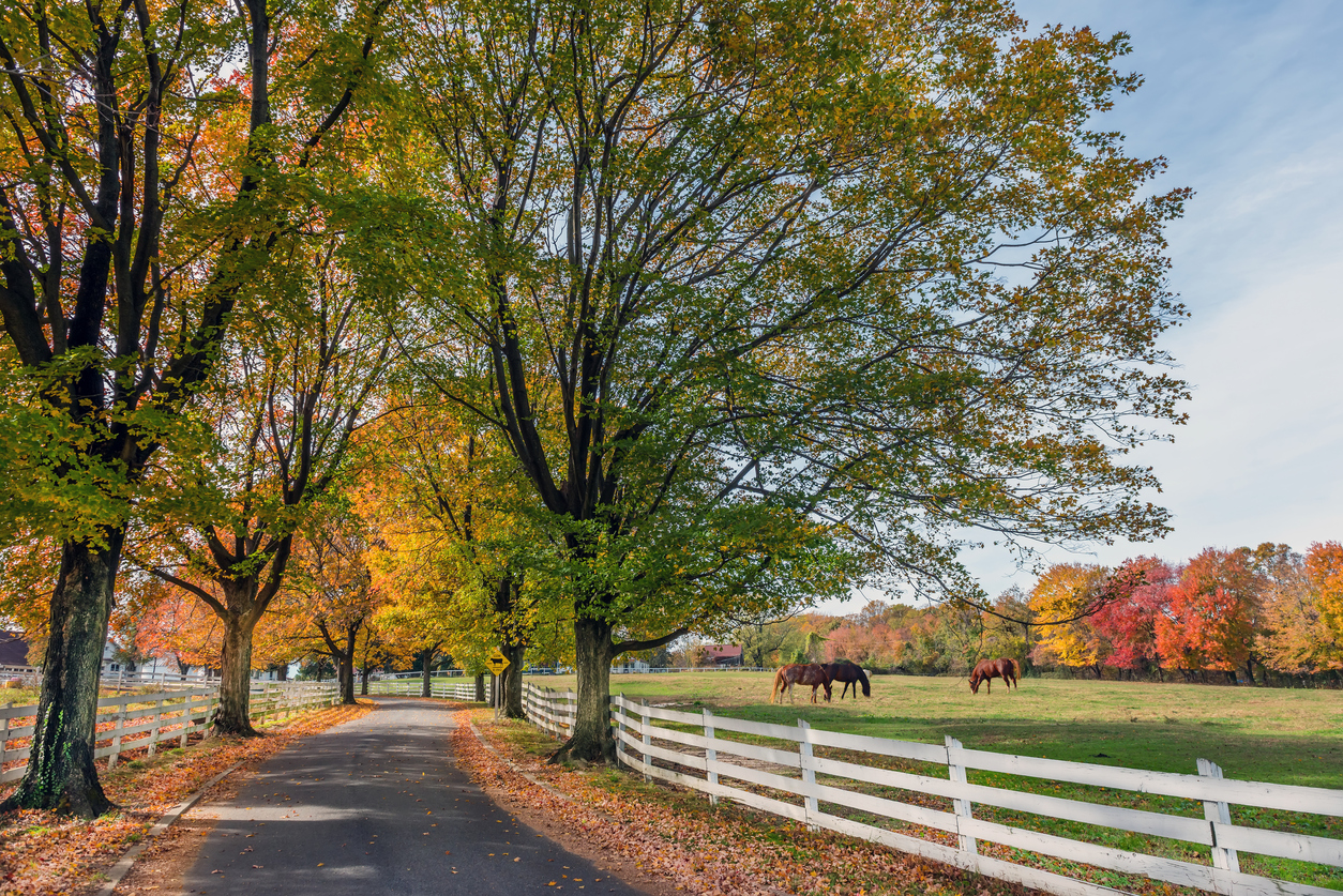 Maryland Rural Scene